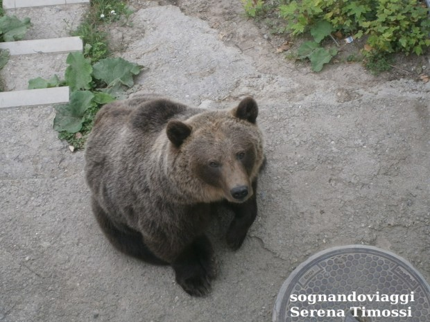Berna orsi