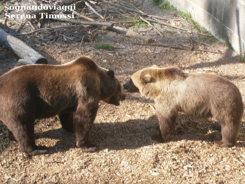 parco orsi berna