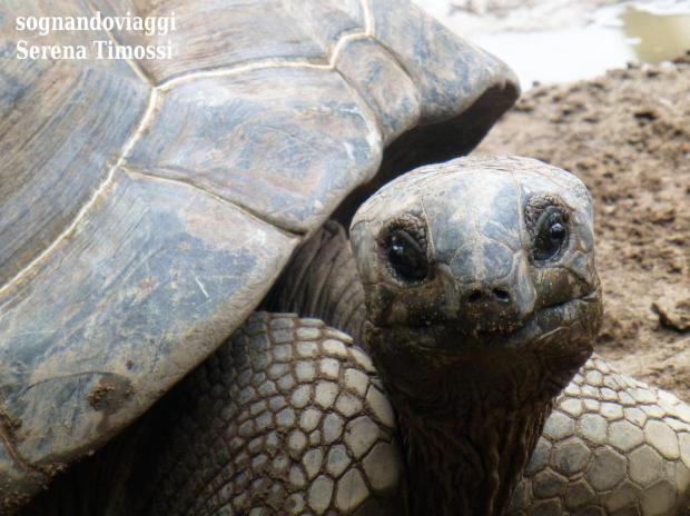 tartaruga le domaine de la reserve