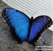 Una delle coloratissime farfalle