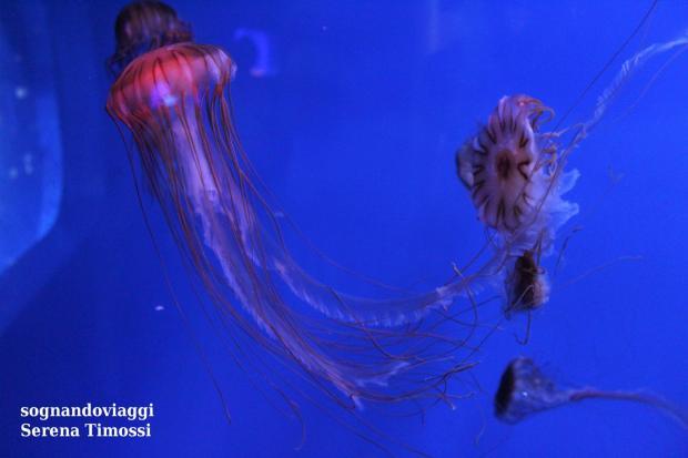 acquario di genova meduse