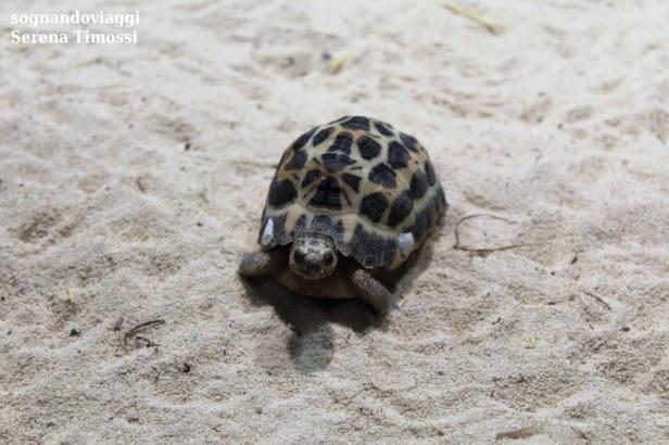 Non solo abitanti del mare...all'Acquario vi aspettano anche serpenti e tartarughe!