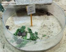 Uova e cuccioli di tartaruga