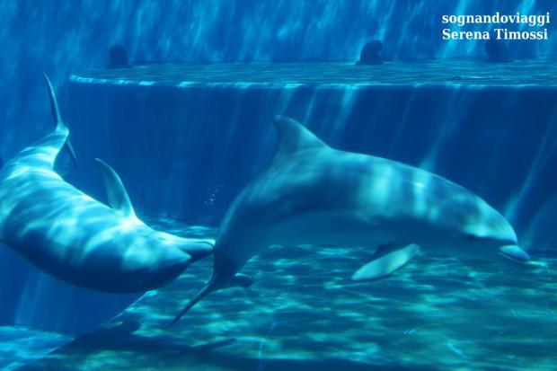 acquario-genova-delfini