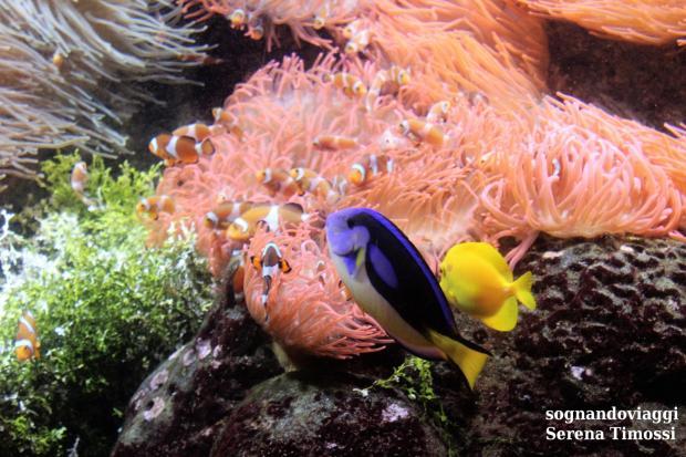 acquario genova pesce pagliaccio_1866x1244