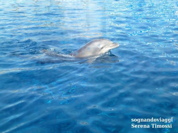 delfini acquario-di-genova