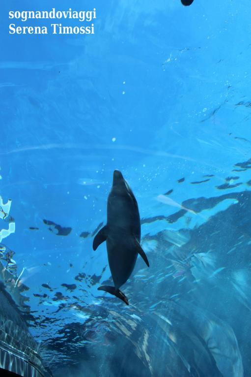 delfini-acquario-di-genova