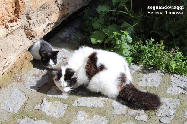gatti civita di bagnoregio