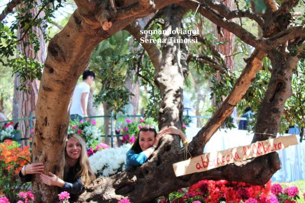 abbraccia l'albero euroflora