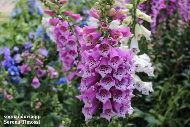 fiori euroflora