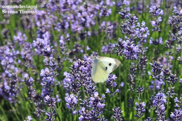 farfalla sale san giovanni