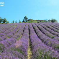 CAMPI DI LAVANDA IN ITALIA, DOVE TROVARLI: LA FIORITURA A SALE SAN GIOVANNI