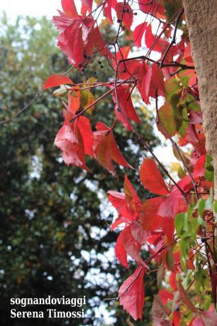 Colori d'autunno nel parco che circonda il castello