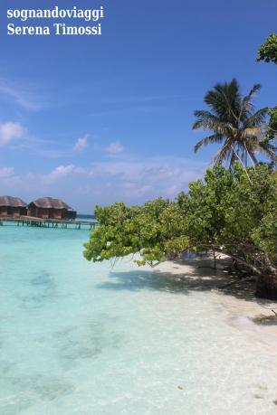 Maldive - Vegetazione protesa verso il mare con l'alta marea