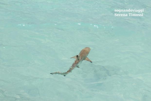 squalo maldive