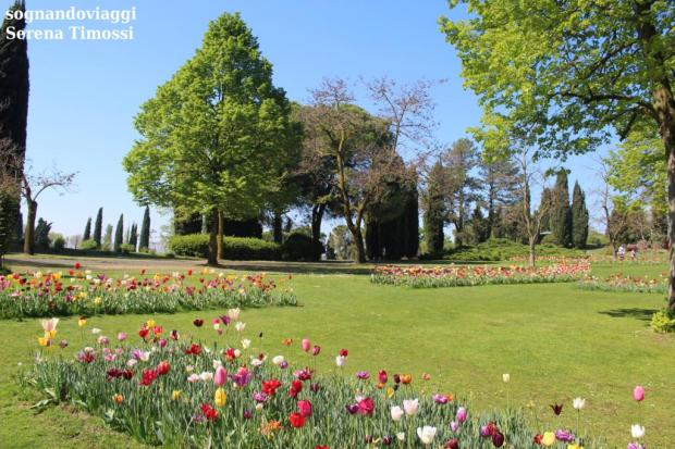 tulipanomania sigurtà