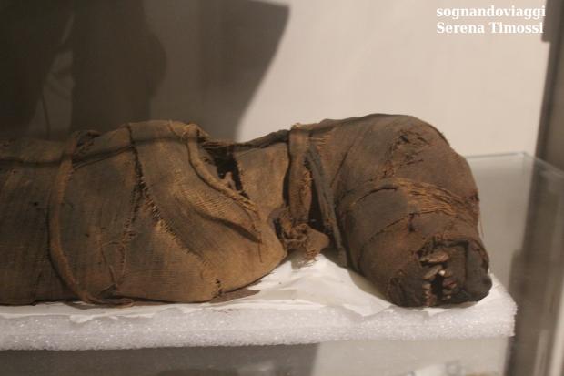 mummie animali Museo Egizio