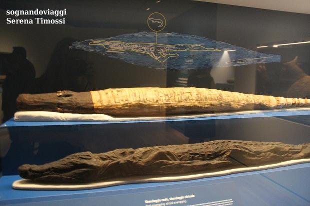 Mummie di coccodrillo