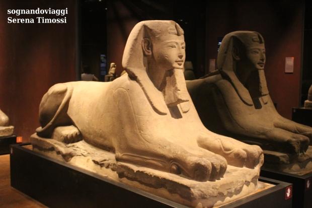 Sfinge museo egizio