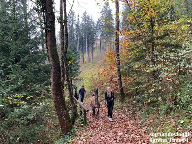 trekking lama liechtenstein