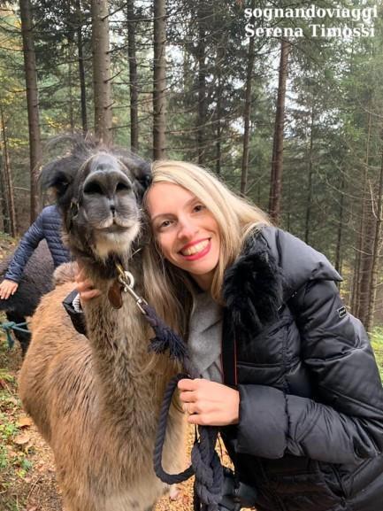 lama alpaca trekking liechtenstein