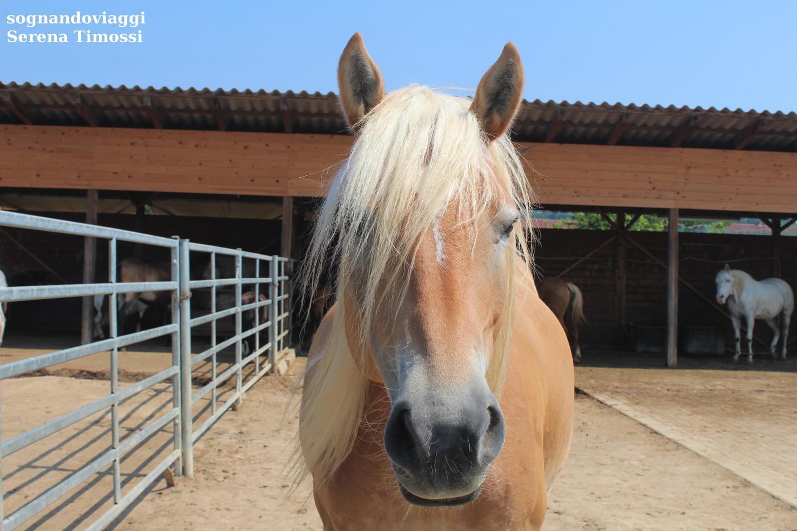 Cavallo Asintrekking